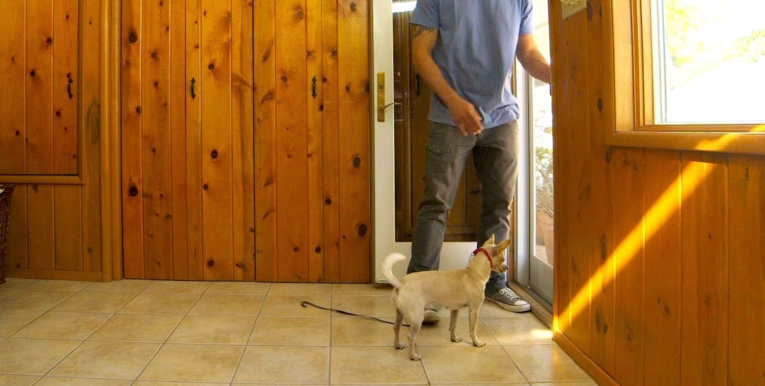 How to Prevent a Dog from Door Charging