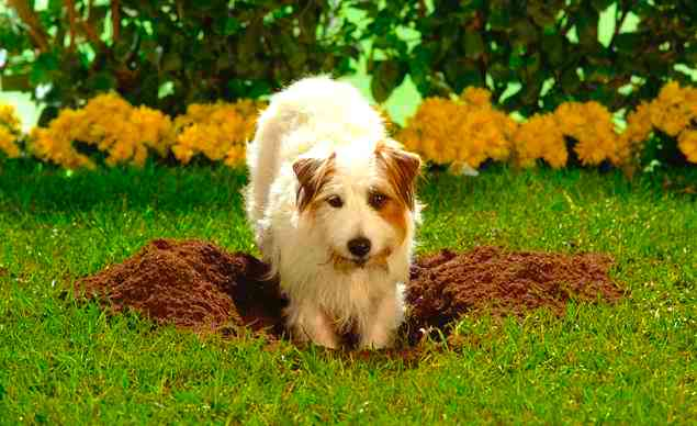 How To Stop Dogs Digging In Garden Beds